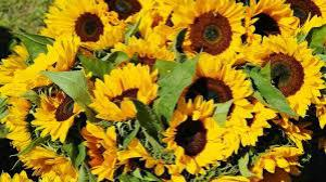 toko bunga di jakarta pusat